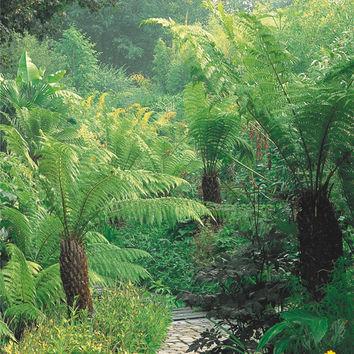 Acheter creer un jardin exotique sous nos climat - Creer un jardin exotique sous nos climats ...