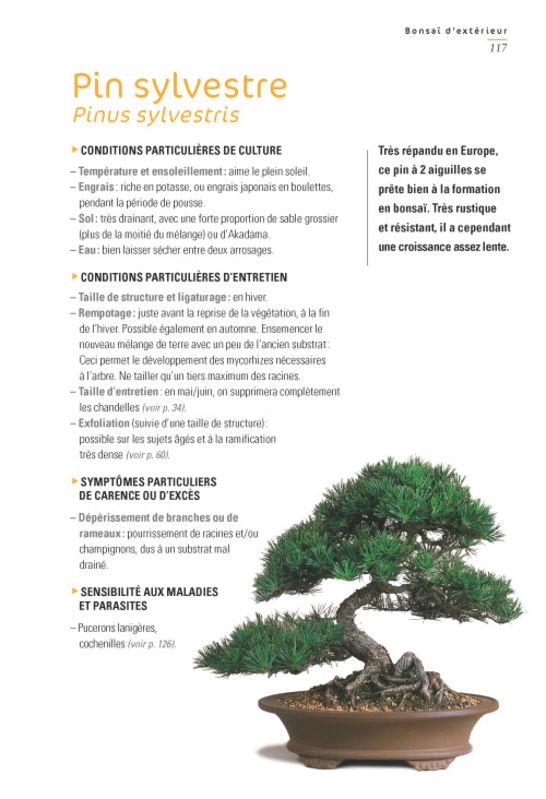 bonsai dinterieur et dexterieur ne